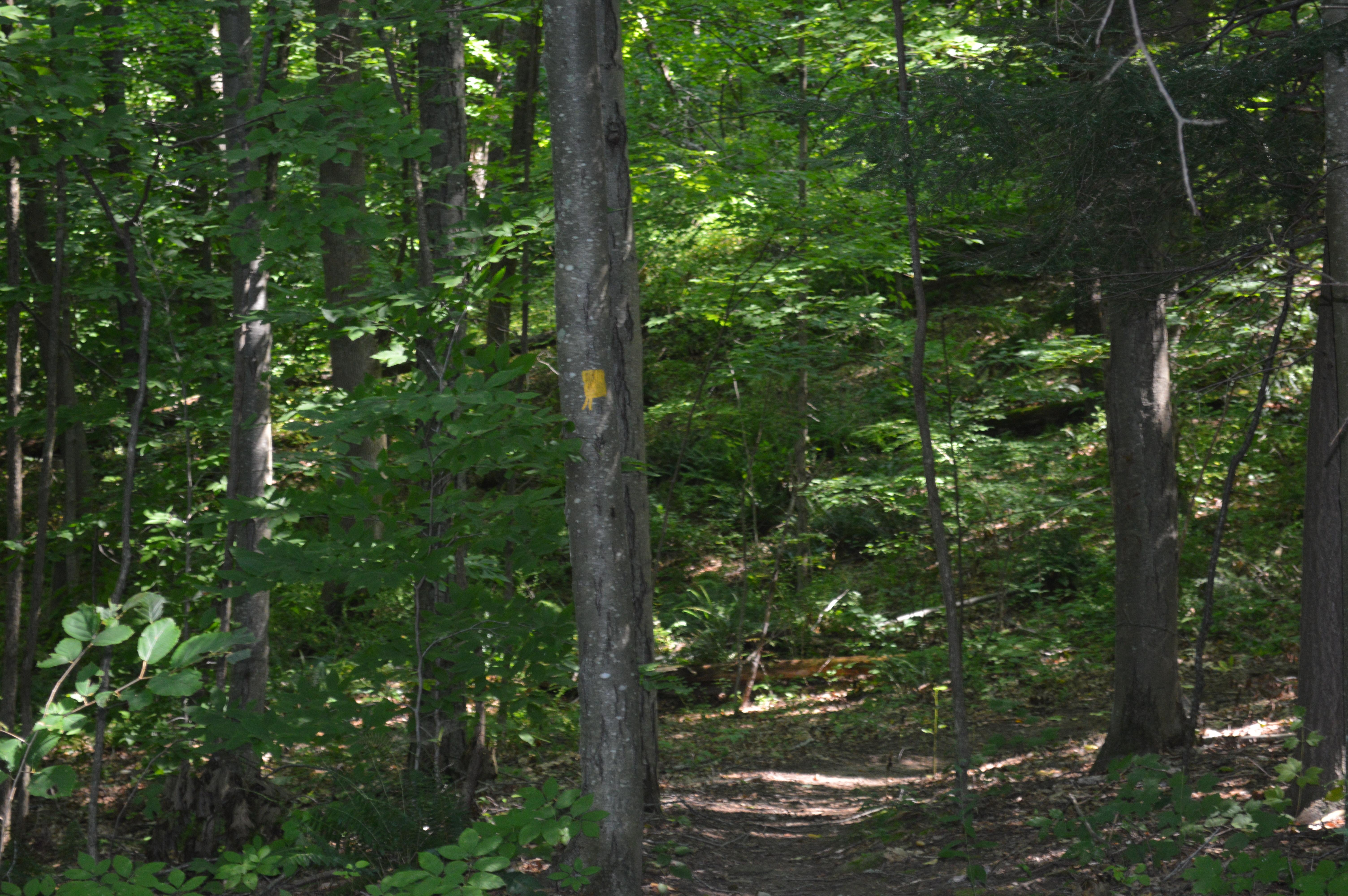 Hidden Nearby: The Kent Falls CCC Trail | Hidden in Plain ...