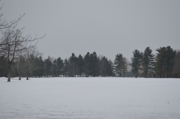 The Topsmead meadow in winter, a wonderful spot for snowshoeing or cross-country skiing.